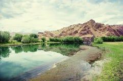 有海藻的Steppe透明的湖与树树丛  免版税图库摄影