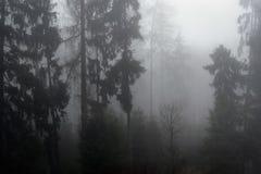 有涌现从鬼的薄雾的高大的树木的一个黑暗的森林 库存图片