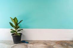有淡色水泥墙壁的小植物 免版税库存图片