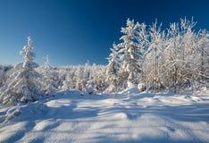 有深雪的冬天森林在冷淡的晴天 免版税库存照片