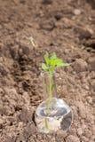 有清楚的水和植物的烧瓶旱田的 免版税库存照片
