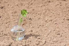 有清楚的水和植物的烧瓶旱田的 免版税库存图片