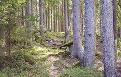 有渗出的阳光的不可思议的春天森林  免版税库存图片