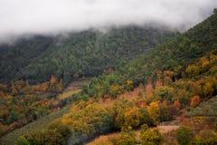 有温暖的秋天颜色的一个美妙的森林 库存图片