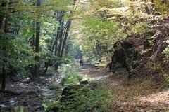 有游人的秋天森林 免版税库存图片