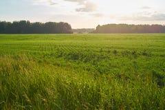 有湖和小山的绿色草甸 库存照片