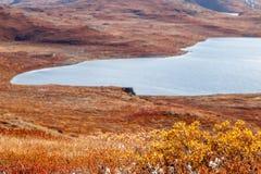 有湖的在背景中, K秋天格陵兰寒带草原植物 库存照片