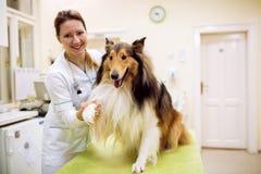 有满意的狗的微笑的愉快的兽医在宠物诊所 免版税库存照片