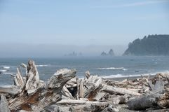 有漂流木头的迷雾山脉海岛在Rialto海滩 奥林匹克国家公园, WA 图库摄影
