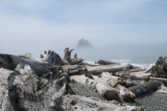 有漂流木头的迷雾山脉海岛在Rialto海滩 奥林匹克国家公园, WA 库存照片