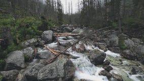 有瀑布的美丽的山河在森林里 股票录像