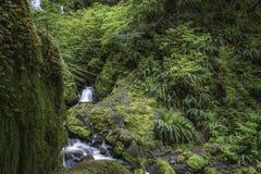有瀑布的雨林洞穴 库存图片