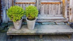 有灌木的罐在一条低长凳 免版税库存照片