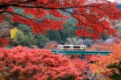 有火车的美丽的槭树叶子 免版税库存图片