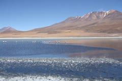 有火鸟的美丽的湖在玻利维亚人安地斯 免版税库存图片