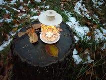 有灼烧的蜡烛的装饰灯笼在秋天公园晚上 免版税库存照片