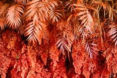 有热带植物的墙壁 自然红色背景 免版税图库摄影