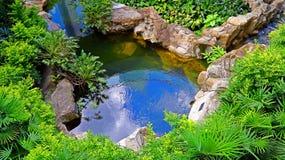 有热带植物的庭院池塘 图库摄影