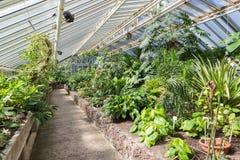 有热带植物的温室在柏林植物园里 库存图片