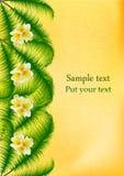 有热带羽毛花的棕榈叶子 免版税图库摄影