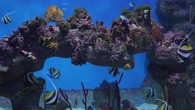 有热带鱼的美丽的海洋水族馆和珊瑚库存英尺长度录影 股票录像