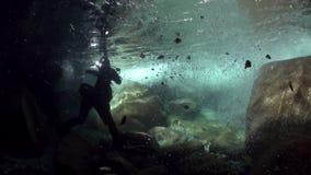 有照相机的潜水者水下在山河Verzasca 股票录像