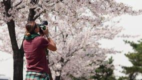 有照相机的白种人自由职业者的新闻工作者为开花的佐仓照相的 影视素材