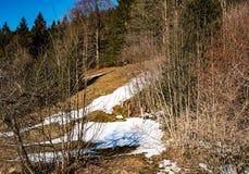 有熔化的雪的森林在春天背景中 免版税库存图片