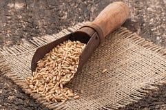 有燕麦五谷的老测量的瓢  免版税库存照片