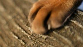有爪的猫爪子 影视素材