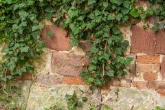 有爬行物的石篱芭 免版税库存图片