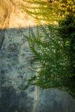 有爬行的植物的老粗砂墙壁 库存照片