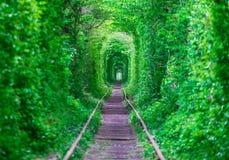 有爱春天森林女孩gudlyayut铁路隧道的人  库存图片
