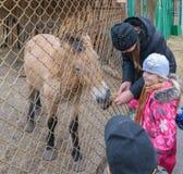 有父母的孩子在国家公园喂养动物 免版税图库摄影