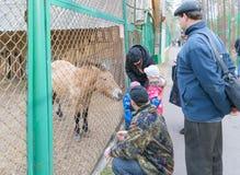 有父母的孩子在国家公园喂养动物 图库摄影