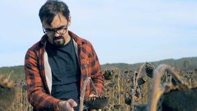 有片剂的一位农夫检查干植物,关闭的  损坏的庄稼概念 影视素材
