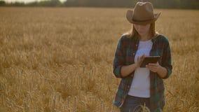 有片剂的一位妇女农夫 聪明种田和数字农业 股票录像