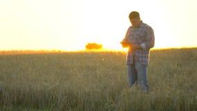 有片剂的农夫人在日落的麦田 现代种田,在农业的先进技术 麦子的农夫人 影视素材
