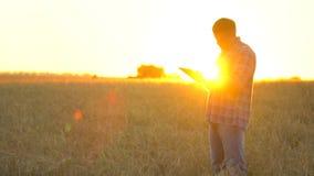 有片剂的农夫人在日落的麦田 现代种田,在农业的先进技术 麦子的农夫人 股票录像