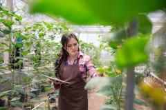 有片剂的女性农夫 图库摄影