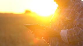 有片剂的接近的农夫手在日落的麦田 现代种田,在农业的先进技术 人 股票录像