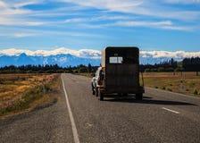 有牛的提取汽车在拖车在路的无盖货车旅行在美好的自然,新西兰自然风景风景路线 库存照片
