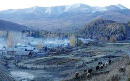有牛的牧人 图库摄影