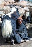 有牦牛的西藏妇女在拉达克,北部印度 库存照片