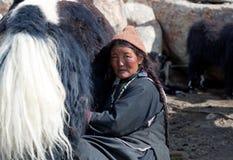 有牦牛的西藏妇女在拉达克,北部印度 免版税图库摄影