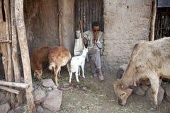 有牲口的一个人,埃塞俄比亚 库存图片