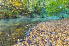 有狂放的河的秋季森林 免版税图库摄影