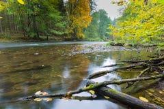 有狂放的河的秋季森林 库存照片