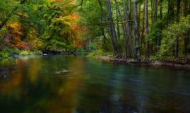 有狂放的河的秋季森林 库存图片