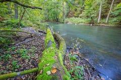 有狂放的河的秋季森林 免版税库存照片